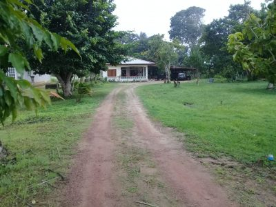 Makelaars in Suriname