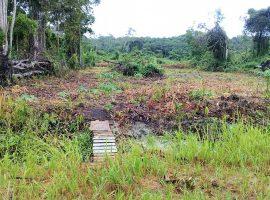 makalaars en taxateurs in Suriname
